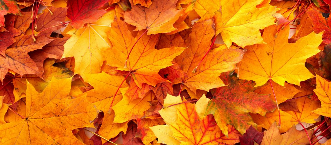 fall-leaves-wallpaper-desktop-20563