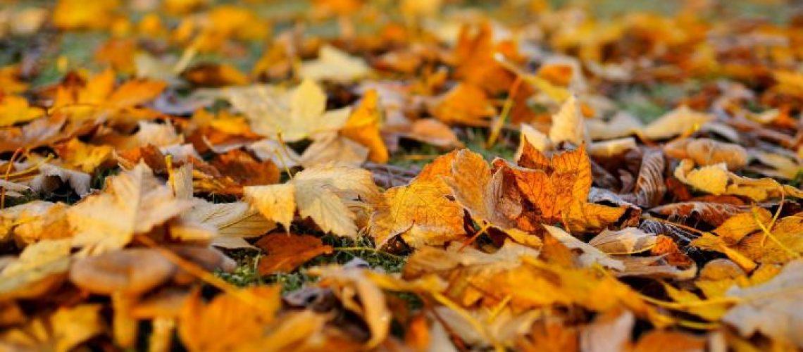 leaves-1818625_1920